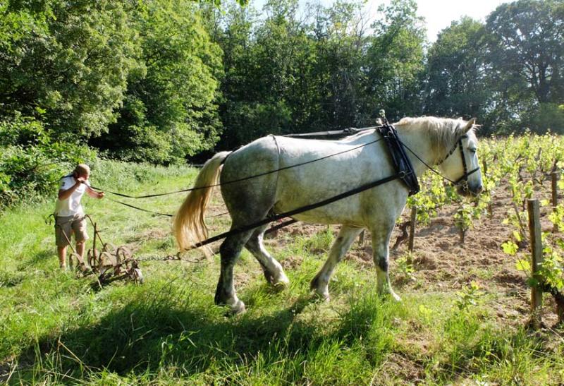 1vignerons_alban_cheval