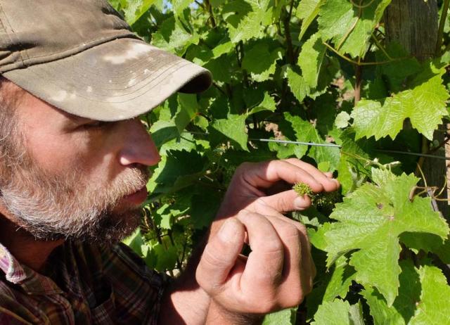 1thomas_puechavy_future_grapes