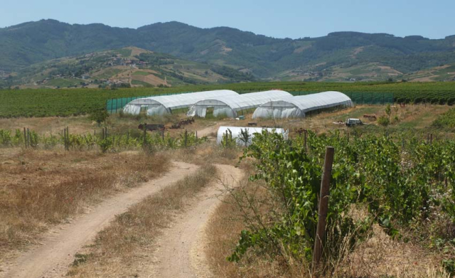 1romain_des_grottes_three_greenhouses