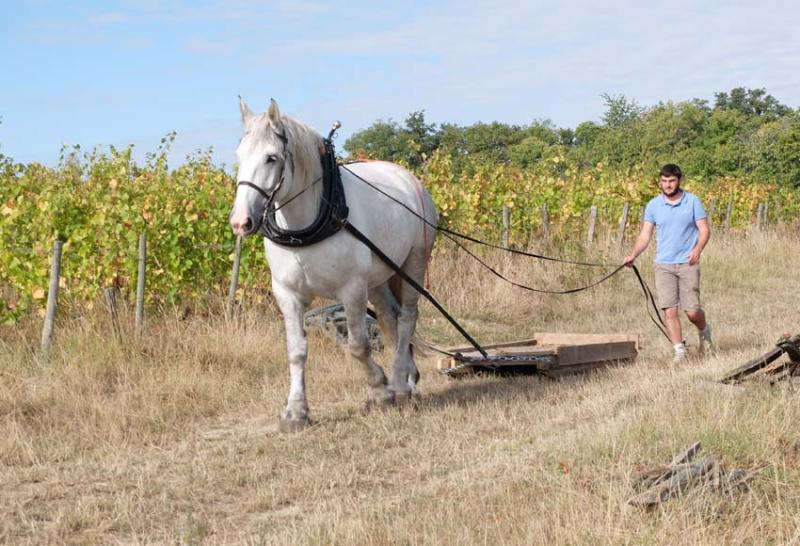 1maisons_brulees_harvest_sled