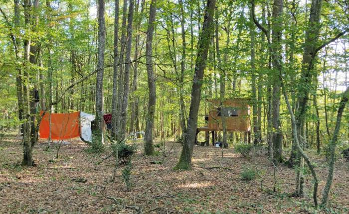 1caplain_roxane_tree_house
