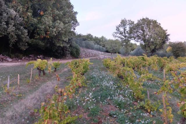 1gasqui_vineyard_terraces