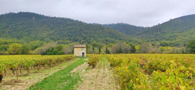 1provence_var_vineyard_hills1
