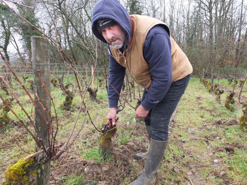 1laurent_saillard_pruning