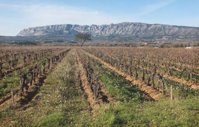 1temps_des_reveurs_vineyard1