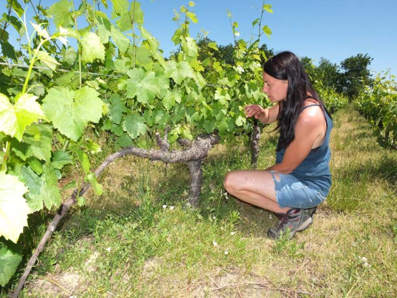 1blandine_floch_old_gamay_vines
