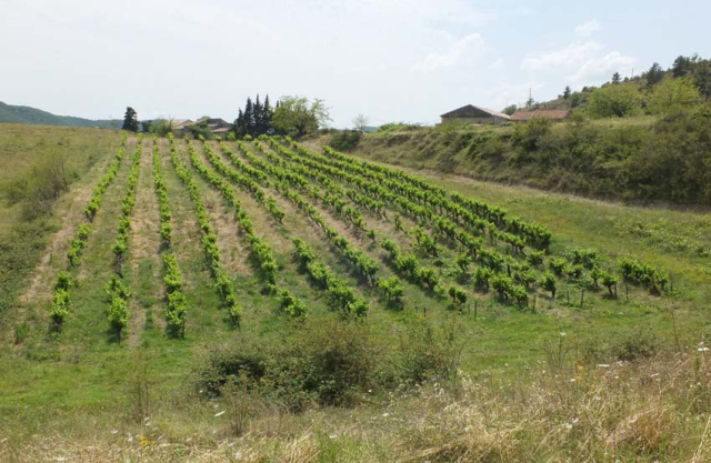 1anders_vineyard_isolated_parcel