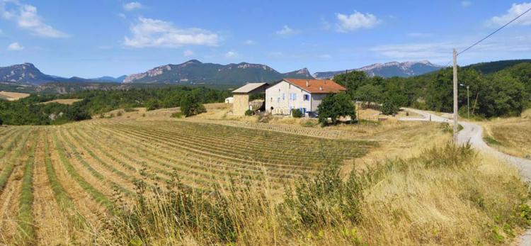 1champ_possible_wine_farm2