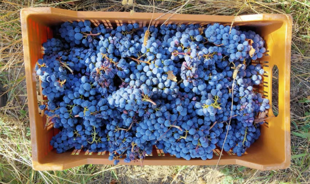 1maisons_brulees_grapes