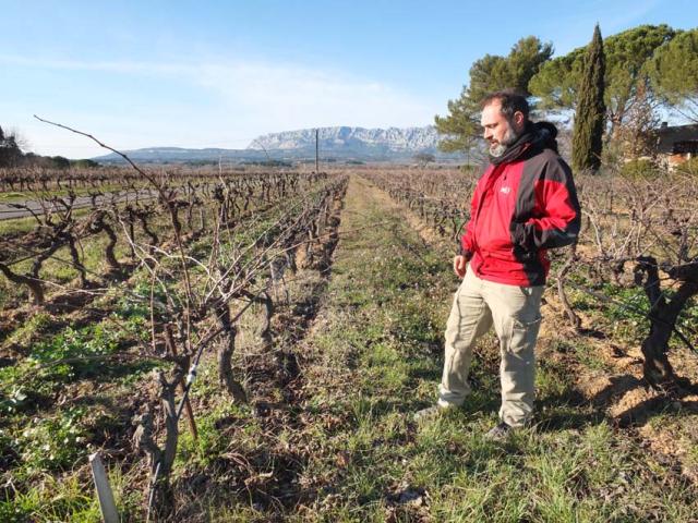 1temps_des_reveurs_vineyard_rows1