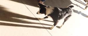 1degust_thesee_noella_chai_dog