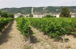 1valvigneres_church_vineyard