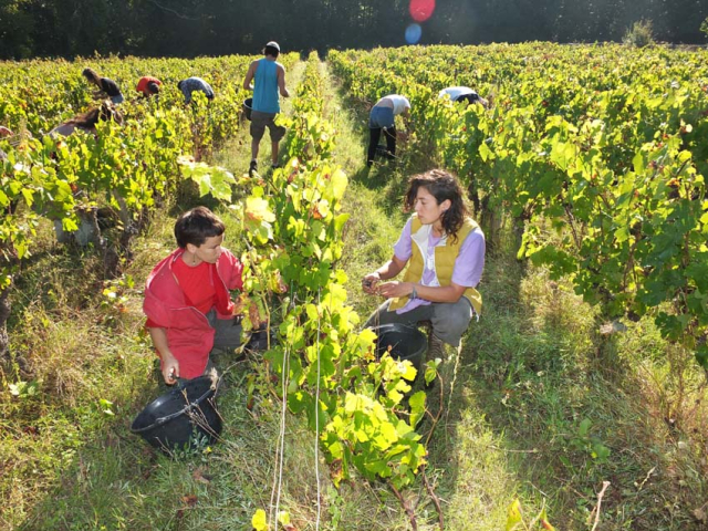 1maisons_brulees_pickers