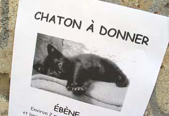 avignon_chaton