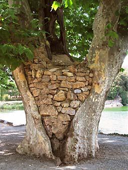 besse_platane_pierres