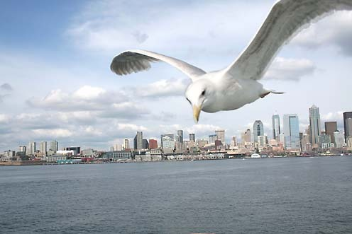Us_seattle_mouette
